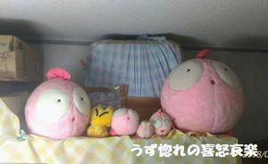 2 同 ぎょぴちゃん写真.jpg