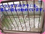 IMG_2250_R_thumb.jpg