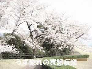 14 満開の桜.JPG
