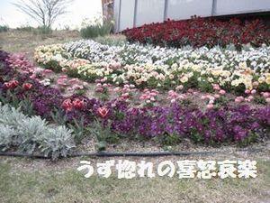 21 同 花壇写真.JPG