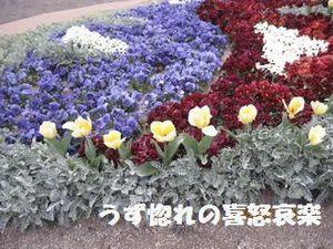 22 同 花壇写真.JPG