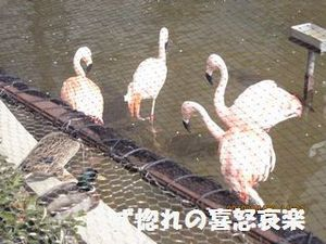 5 フラミンゴちゃん達.JPG