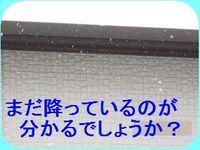 IMG_2270_R.jpg